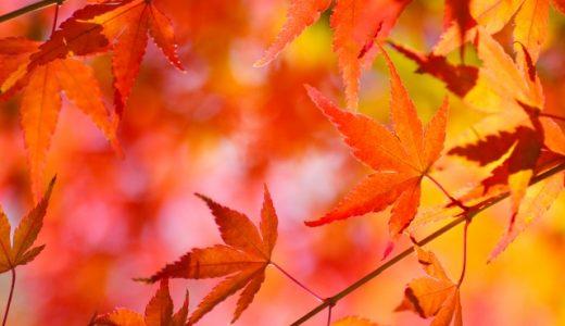 【童謡】もみじの歌詞の意味!日本語の美しさをあらためて再発見!
