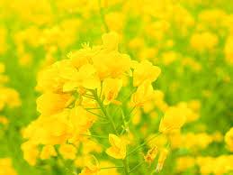 花粉症 対策 掃除