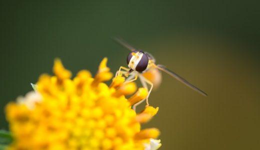 花粉症シーズン快適に過ごすコツ!免疫力アップと花粉ブロックで相乗効果!