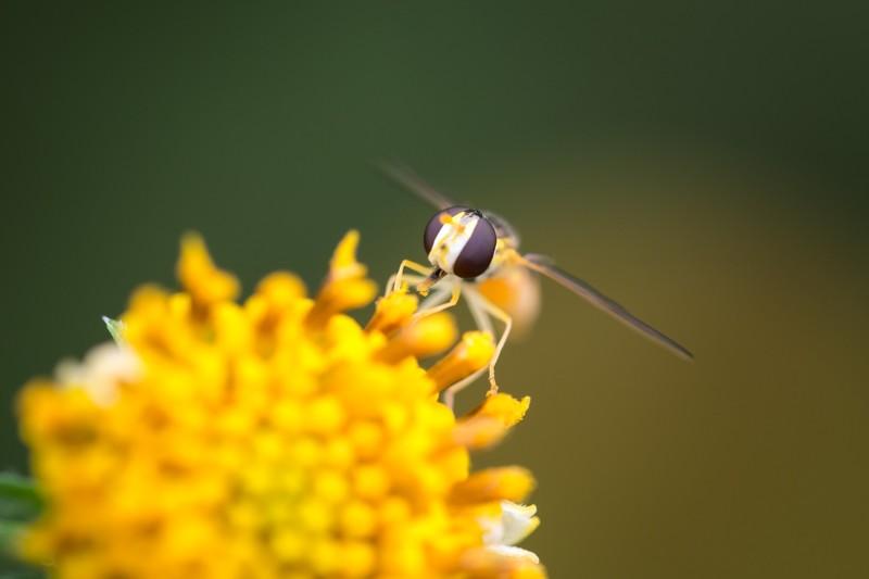 花粉症シーズン 快適 コツ