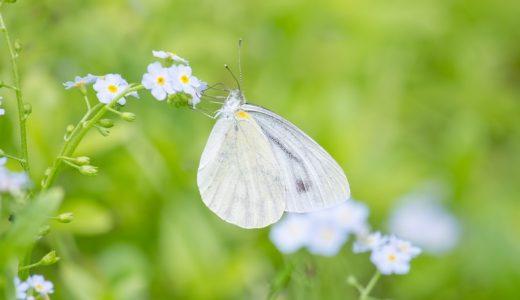 花粉症でのどの痛みやイガイガの原因は?食事や乳酸菌で対策して治す!