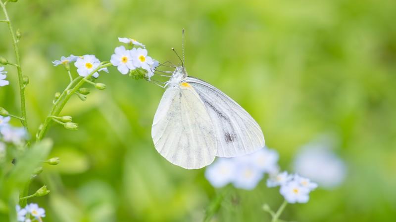 花粉症 のどの痛み 原因