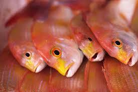 鯛の旬の時期や季節は春?秋?鯛は何種類?栄養や料理レシピ!DHAは?