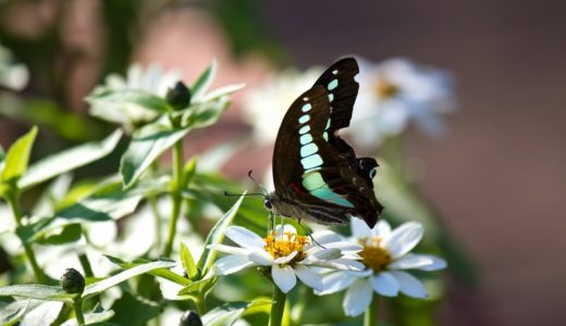 花粉症に加湿器を使う効果!推奨湿度は何%?置き場所はどこがおすすめ?