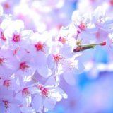 花粉症 お花見 対策