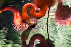 米津玄師Flamingo(フラミンゴ)MVに出てくる女性は誰?なぜ駐車場で倒れてる?