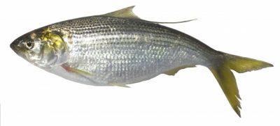 魚へん 冬 漢字