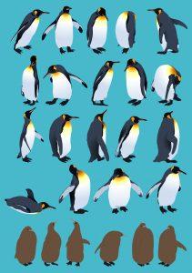 キングペンギン ヒナ 大きさ 水族館