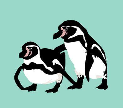 フンボルトペンギン 日本 増えすぎ