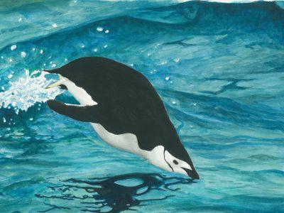 ヒゲペンギン 水族館 ヒナ 特徴