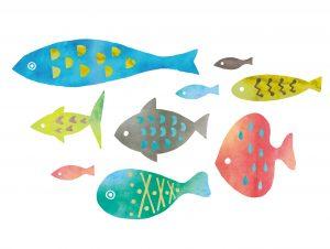 熱帯魚 飼育