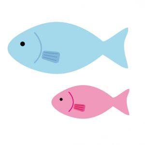 鮭 サーモン 違い