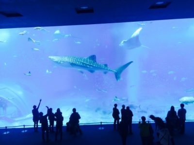 ジンベエザメ 水族館 大きさ