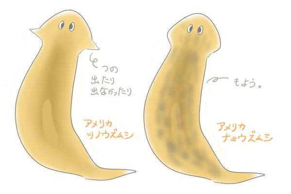 プラナリア 繁殖 実験