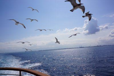 海の色 濃い 藍色 境目
