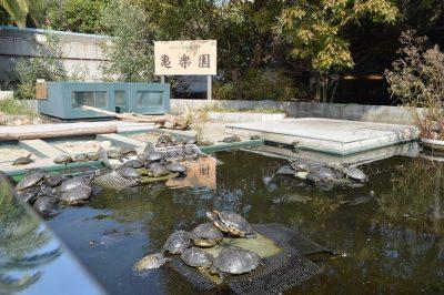 須磨海浜水族園 神戸 水族館 カメ