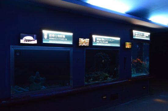 須磨海浜水族園 神戸 水族館