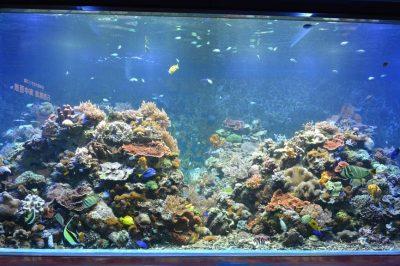 須磨海浜水族園 神戸 水族館 サンゴ