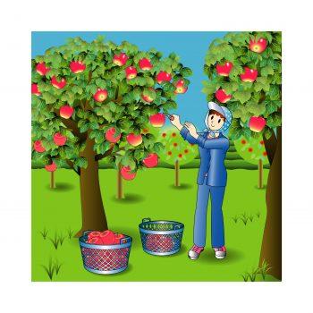 りんご 皮 食べる 栄養 農薬