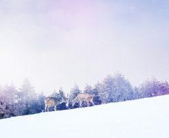 雪 種類 言葉 霰