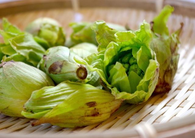 春 山菜 種類
