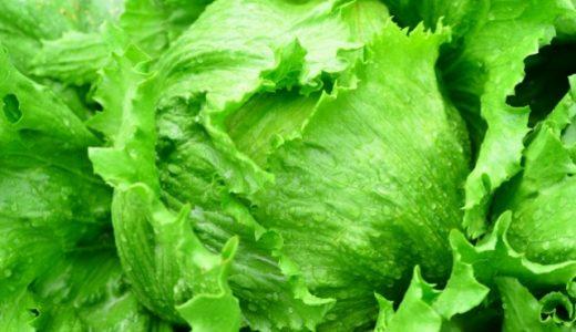 キャベツと白菜やレタスの違い!見分け方や栄養効果や食物繊維やカロリー!